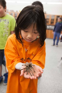 Expo participants holds an arachnoid